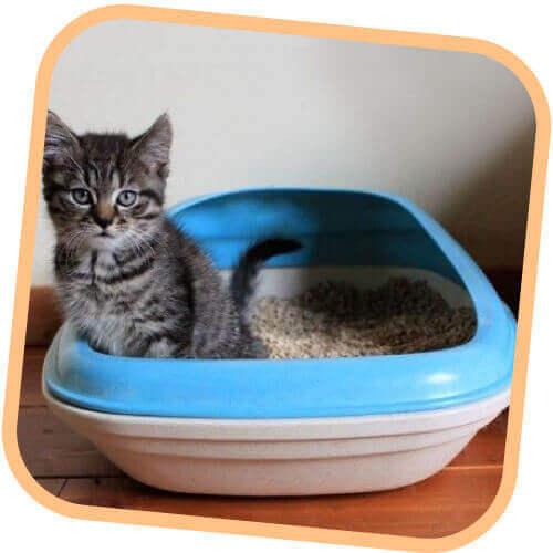 Περιποιήση & Υγιεινή Γάτας