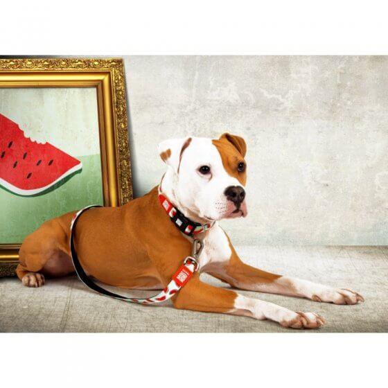 Περιλαίμιο Σκύλου Max & Molly Watermelon Small 2