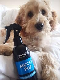 MUCKY PUP NO-RINSE SHAMPOO SPRAY ANIMOLOGY - dog line Σ Π Ρ Ε Ϊ-250ml 2