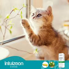 INTUIZOON EUFORIS OIL - 30ml 3