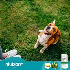 INTUIZOON EUFORIS OIL - 30ml 1