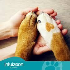 INTUIZOON EUCLORIS POWDER DOGS & CATS - 20gr 2