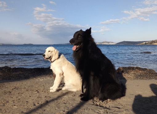 Σχέση παιδιού και σκύλου 1