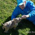 FORESTLAND το 1ο Πρότυπο πάρκο σκύλων στην Αττική 3