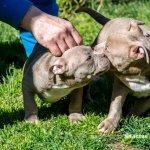 FORESTLAND το 1ο Πρότυπο πάρκο σκύλων στην Αττική 2