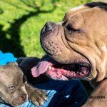 FORESTLAND το 1ο Πρότυπο πάρκο σκύλων στην Αττική 1