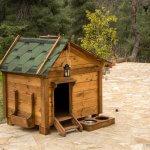 FORESTLAND το 1ο Πρότυπο πάρκο σκύλων στην Αττική 6