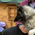 FORESTLAND το 1ο Πρότυπο πάρκο σκύλων στην Αττική 7