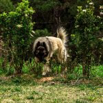 FORESTLAND το 1ο Πρότυπο πάρκο σκύλων στην Αττική 5
