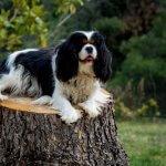 FORESTLAND το 1ο Πρότυπο πάρκο σκύλων στην Αττική 4