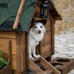 FORESTLAND το 1ο Πρότυπο πάρκο σκύλων στην Αττική 12